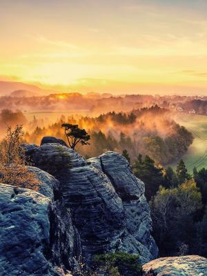 日落风景树木移动壁纸