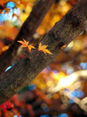 树枝散景移动壁纸