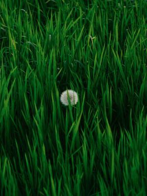 小花快乐长大移动壁纸