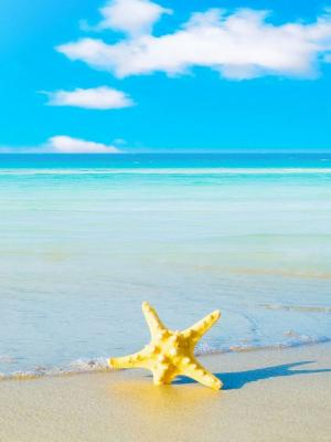 在海滩机动性墙纸的海星