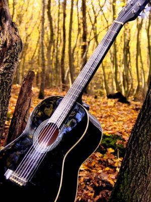 Forrest吉他手机壁纸