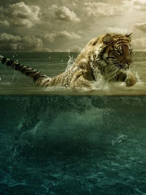 老虎玩水动态壁纸