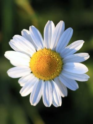 花是开放手机壁纸