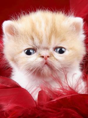 最可爱的小猫手机壁纸