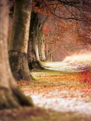 山毛榉秋天的树木手机壁纸