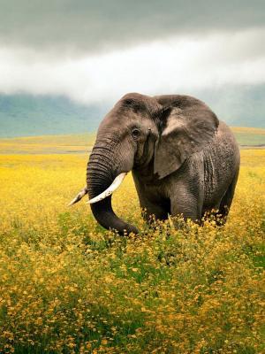 场大象手机壁纸