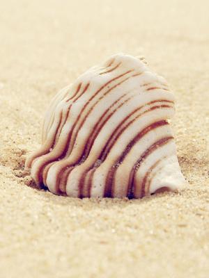 贝壳沙滩手机壁纸