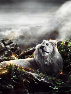 丛林狮子手机壁纸