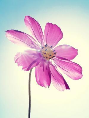 阳光和紫色的花朵移动壁纸