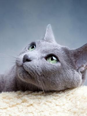 动物猫手机壁纸