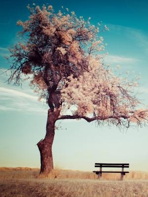 大自然樱花树木手机壁纸