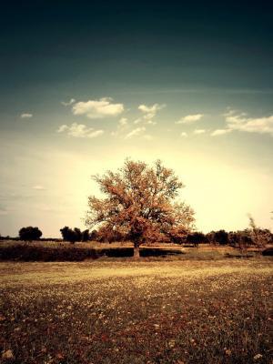 风景大自然移动壁纸