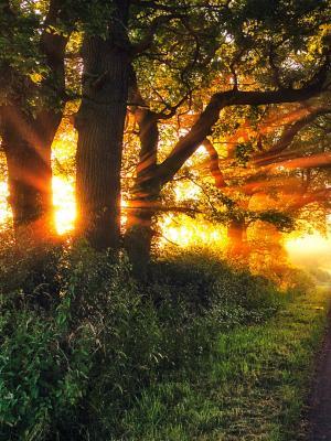 森林移动壁纸的暮光之城