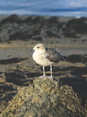 鸟沙滩动物手机壁纸
