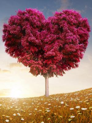 爱的心树领域手机壁纸