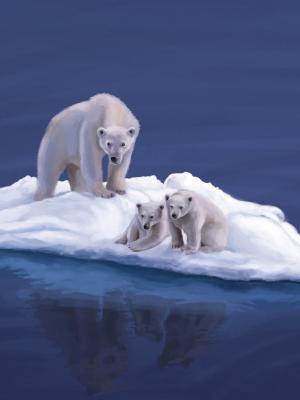 北极熊手机壁纸