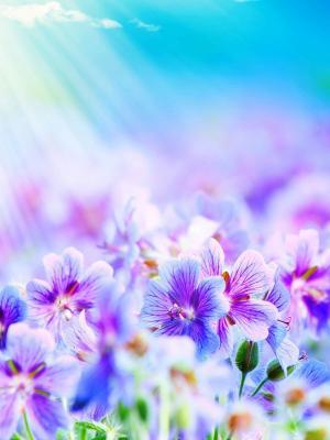 紫色的花朵手机壁纸