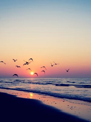 日落海滩移动壁纸