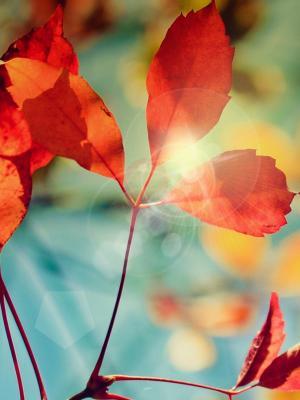眩光的秋季手机壁纸