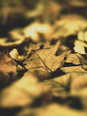 秋叶叶手机壁纸