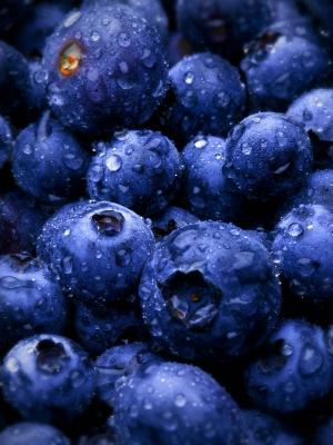 蓝色浆果手机壁纸