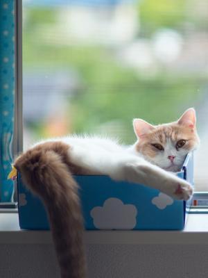 Torode箱子猫手机壁纸