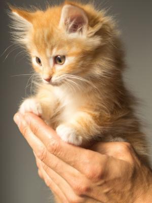 可爱的小猫猫手机壁纸