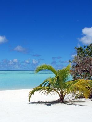 马尔代夫海滩蓝色的天空海洋棕榈树移动壁纸