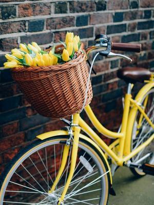 自行车花黄色手机壁纸