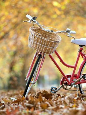 自行车手机壁纸