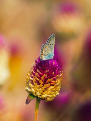 炫彩蝴蝶手机壁纸