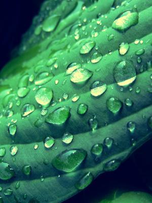 绿色自然移动壁纸