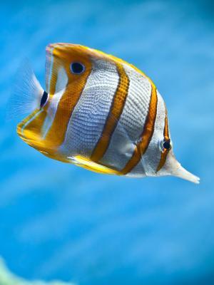 鱼水族馆手机壁纸