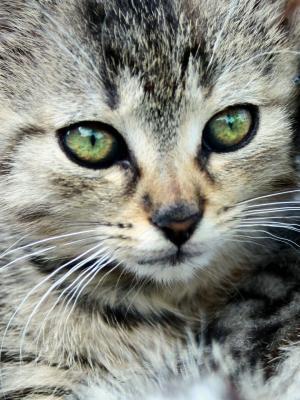 小猫电脑手机壁纸