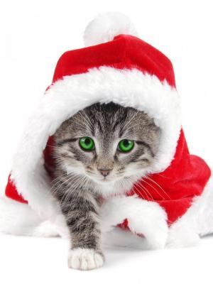 圣诞节圣诞老人猫手机壁纸
