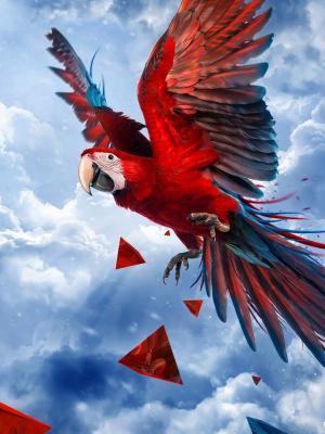 鹦鹉蓝天移动壁纸
