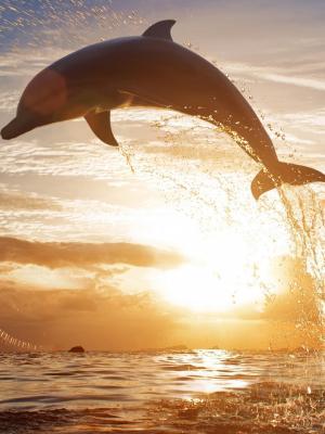 跳跃海豚手机壁纸