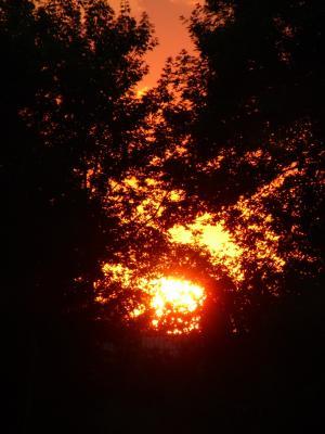 日落移动壁纸