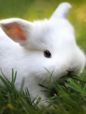 兔子草食物手机壁纸