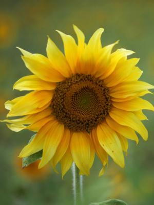 夏天太阳黄色春天手机壁纸