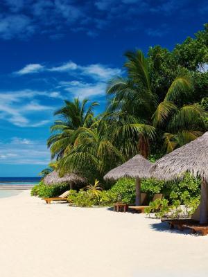 棕榈树上海洋海岸移动壁纸