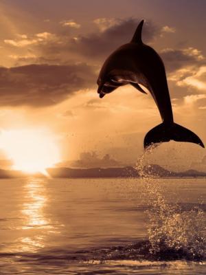 跳跃的海豚手机壁纸