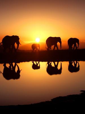 大象移动壁纸