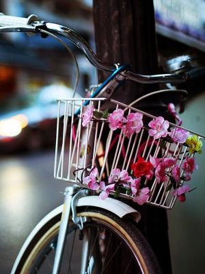 自行车篮子花手机壁纸
