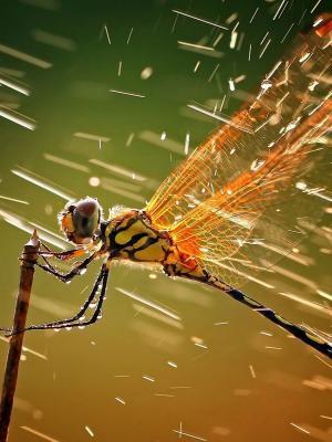 在雨手机墙纸的蜻蜓