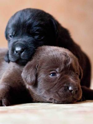 黑婴儿狗手机壁纸