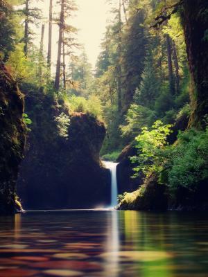 森林流手机壁纸