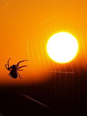 蜘蛛网太阳移动壁纸