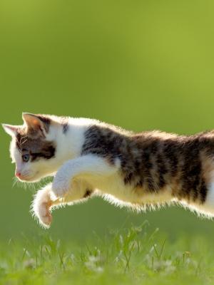 跳猫手机壁纸