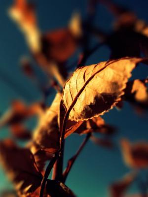 蓝色自然叶子移动墙纸